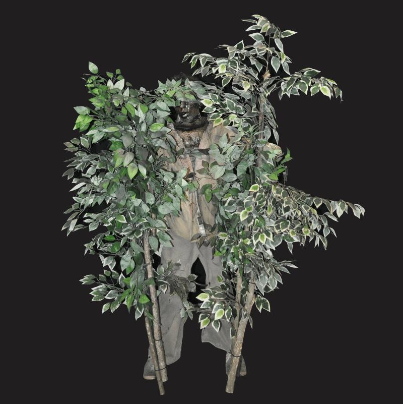 PAINT103-Tree Peek a boo